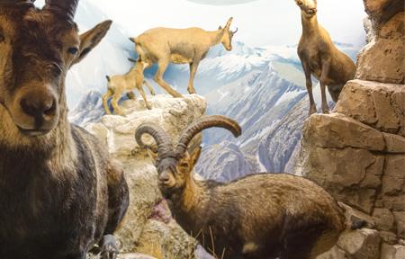 animales de montaña